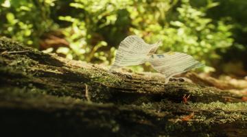 ekokom brouci mravci